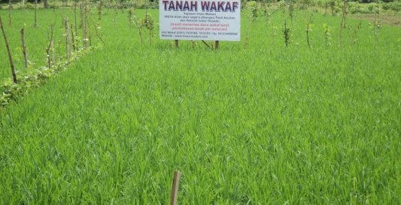 Optimalisasi Wakaf Produkstif optimalisasi wakaf produktif - Optimalisasi Wakaf Produkstif 585x300 - Optimalisasi Wakaf Produktif