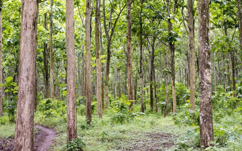 Ada Sejak Kekhalifahan Utsmaniah, Potensi Wakaf Hutan Bisa untuk Kesejahteraan Masyarakat Sekitar  - Ada Sejak Kekhalifahan Utsmaniah Potensi Wakaf Hutan Bisa untuk Kesejahteraan Masyarakat Sekitar 800x500 - Ada Sejak Kekhalifahan Utsmaniah, Potensi Wakaf Hutan Bisa untuk Kesejahteraan Masyarakat Sekitar