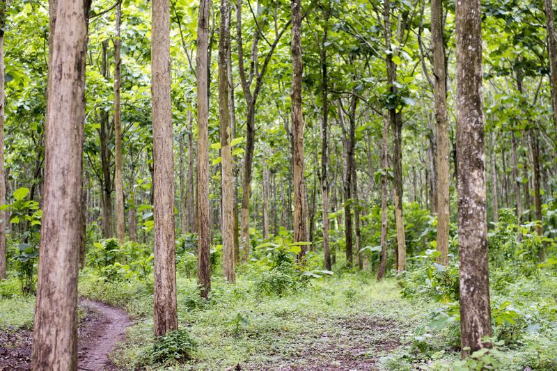 Pelestarian Lingkungan Hidup Melalui  Hutan Wakaf  - Ada Sejak Kekhalifahan Utsmaniah Potensi Wakaf Hutan Bisa untuk Kesejahteraan Masyarakat Sekitar - Pelestarian Lingkungan Hidup Melalui  Hutan Wakaf